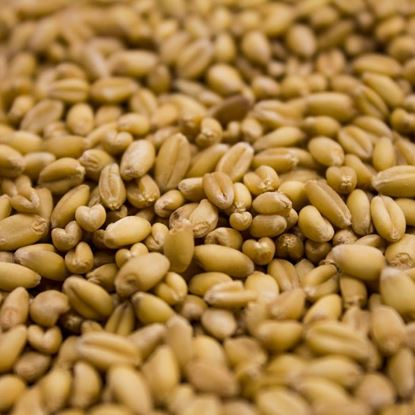 Picture of Rahr Unmalted Wheat