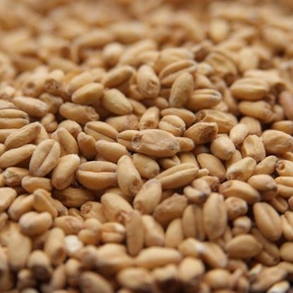 Picture of Rahr White Wheat